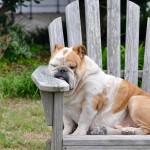 Skrb za hišne ljubljenčke v vročih poletnih dneh